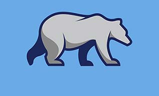 Grey Bear walking on blue background