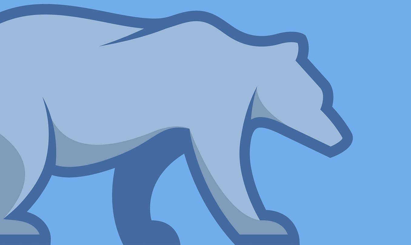 Grey Bear walking on blue background