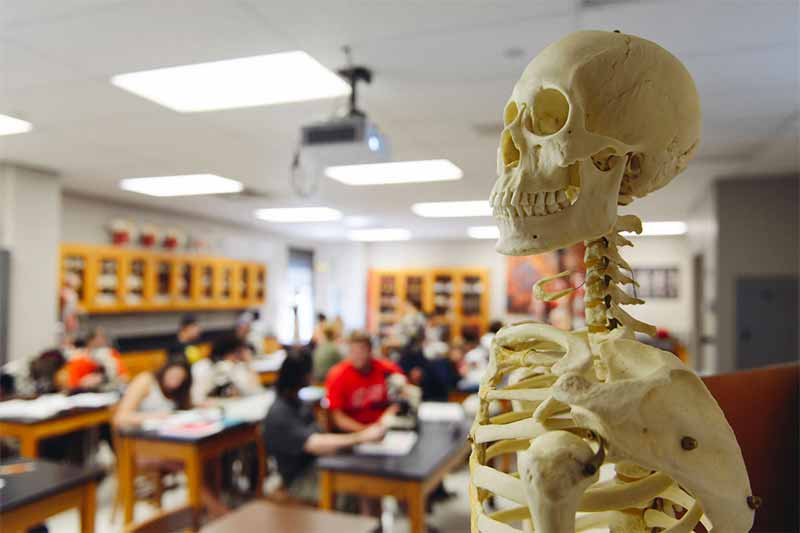 Close up with a skeleton in a biology laboratory